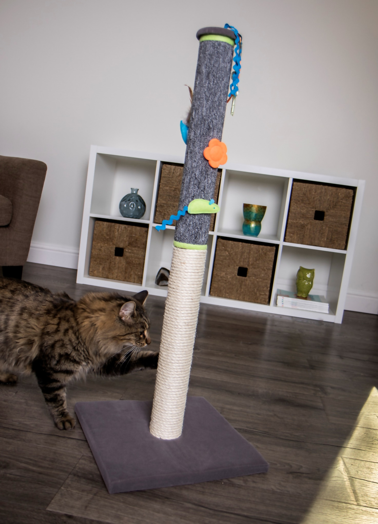 A Norwegian Forest Cat scratches a post