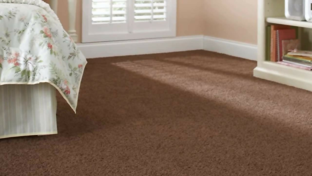 Carpet For Your Norwegian Forest Cat